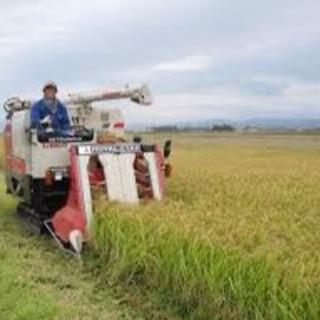 稲刈り代行します!コンバインでの刈り取り経験◯