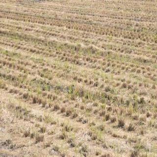 稲刈り後の耕耘する前の2番穂の草刈り代行します!