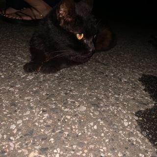 お目目がまん丸可愛い黒猫ちゃん!
