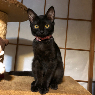 可愛いココちゃん3〜4ヶ月