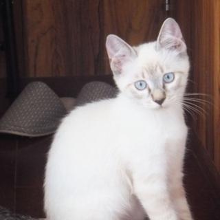 里親募集‼️4匹の子猫の兄弟‼️
