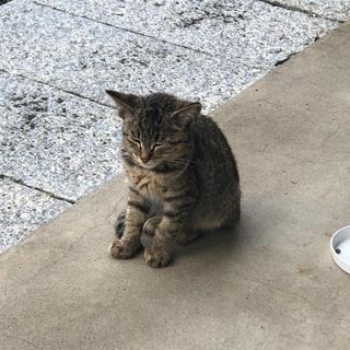 庭に迷い込んできた子猫です、交渉中