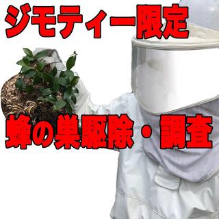 蜂の巣、害虫駆除します【ジモティー限定】