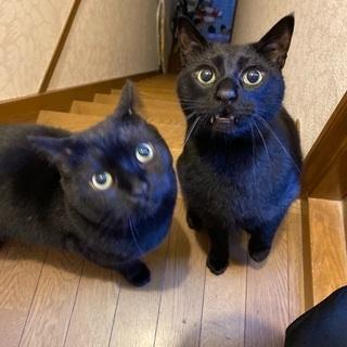 黒猫♂7歳 ボンベイ♂5歳