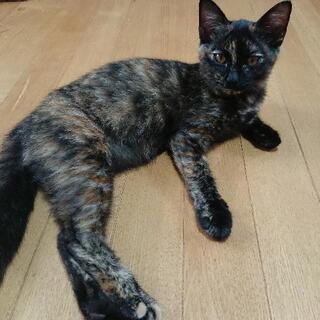 仔猫の里親さんを探しています。