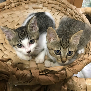2匹の子猫【交渉中】
