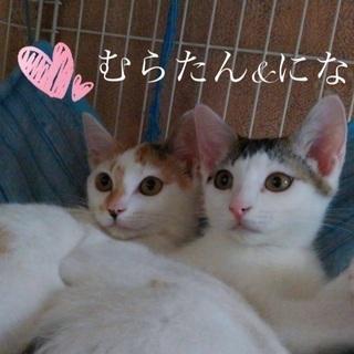 💗可愛さアイドル級❣️💗姉妹のようにそっくりなアイドルフェイス💕✨