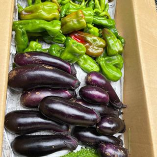 農薬、化学肥料不使用の野菜です。