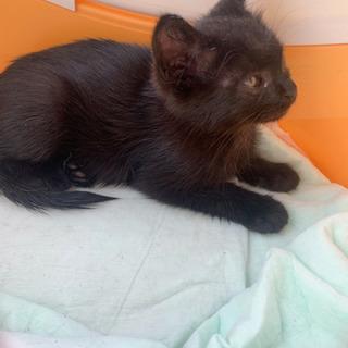 子猫 黒 生後2ヶ月くらい