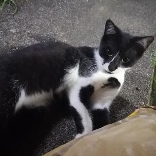地域猫の子供達の里親を募集さして頂きます。