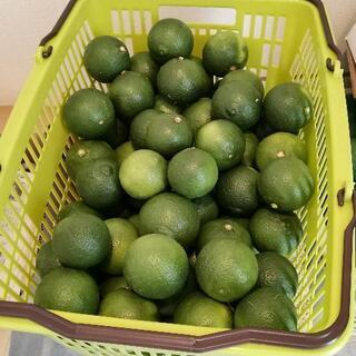 【ネット決済】大分県豊後大野市産カボス 無農薬 20キロ