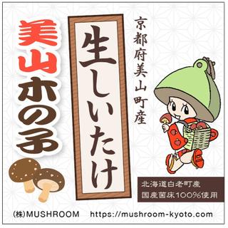 生しいたけ 京都府美山町産     北海道白老町産の菌床を使用