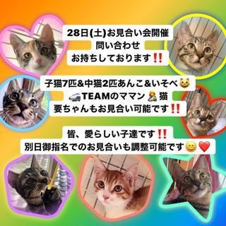 28日(土)保護猫お見合い会開催‼️