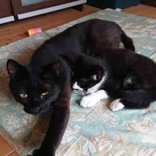 黒猫2歳(女の子)