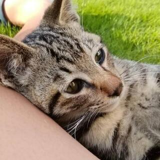 里親募集🐱人懐こく甘えん坊の子猫ちゃん
