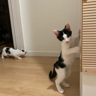 生後6ヶ月くらいのかわいい子猫