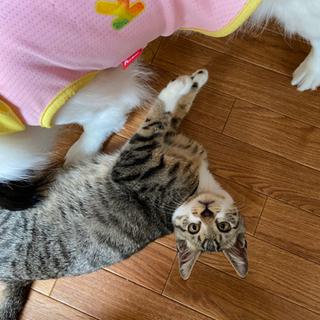 生後3ヶ月の♂の子猫