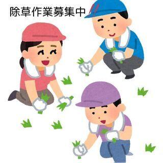 草刈り・野菜パック詰め作業👩🌾募集中!