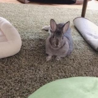 ウサギ 2歳半