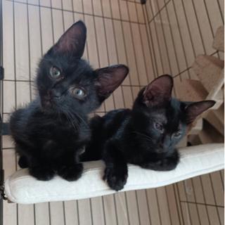 黒猫好きにはたまらないデレデレ兄弟
