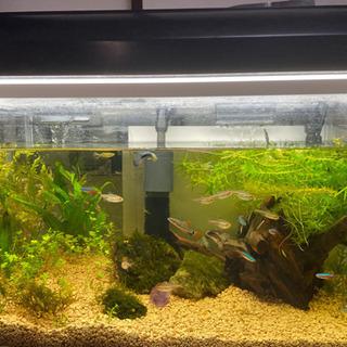 【ネット決済】アクアリウムセット 水槽 生体 フィルター 熱帯魚...