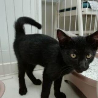 ☆黒色の子猫ちゃんの里親募集です☆