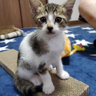 かわいい子猫🐾里親募集🐾
