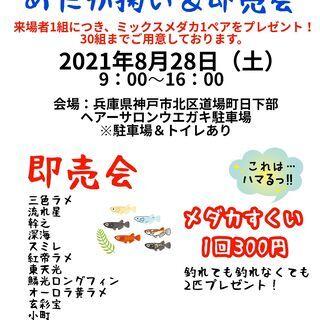 8/28(土)第1回ネバーめだか屋本店でメダカ掬い&即売会を開催...