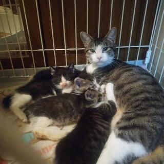 🌟 保護猫 親子 子猫 5匹 🌟