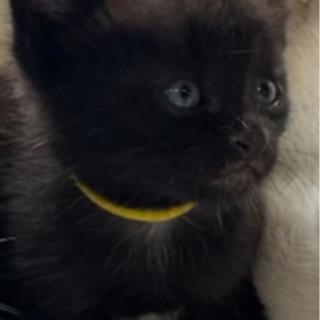 保護猫が産んだ仔猫可愛い盛りです