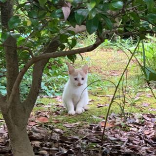【受付終了】保護した子猫の里親を募集しています【里親見つかりました】
