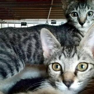 見るたび可愛くて笑顔🥰姉妹猫4ヶ月 - 猫