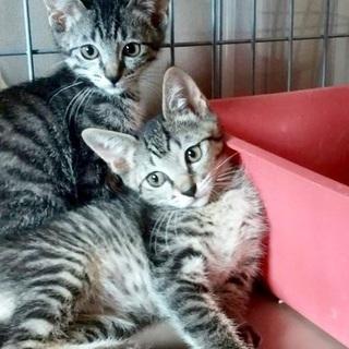 見るたび可愛くて笑顔🥰姉妹猫4ヶ月