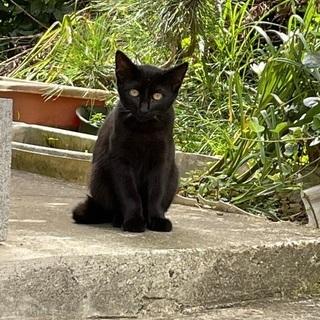 黒猫(子猫)ちゃんの里親募集です