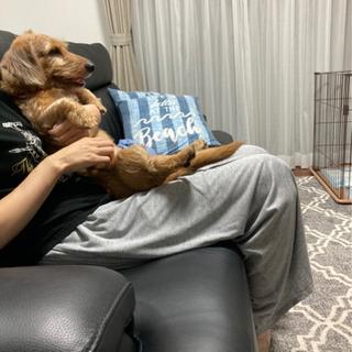 屋内犬里親探しています。
