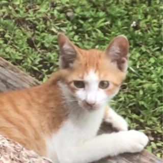 台風の時から迷い込んだ仔猫ちゃん