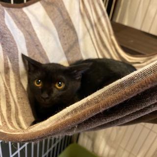 【里親希望者様とお話し中】黒猫の海ちゃん♂