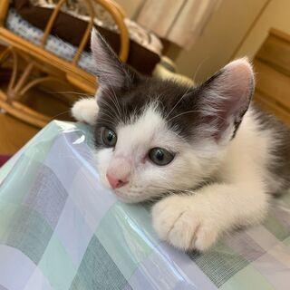 生後2ヵ月の子猫♂
