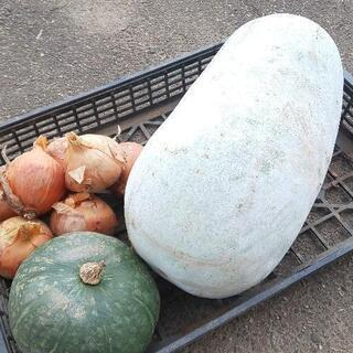 冬瓜・かぼちゃ・玉ねぎ合わせて10kg