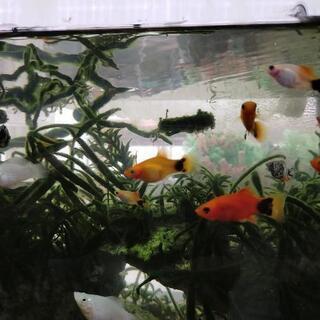 人気の熱帯魚