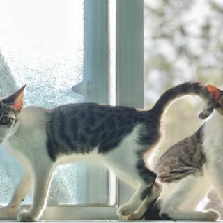 子猫のキキとララ