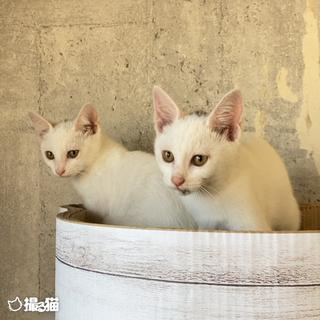 マグロとカツオ ♂ − 徳島県