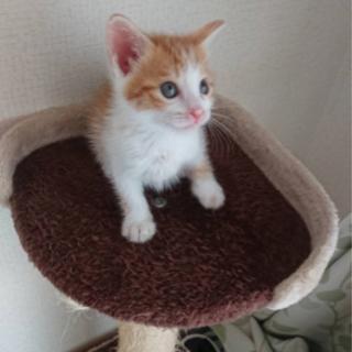 茶トラの子猫です
