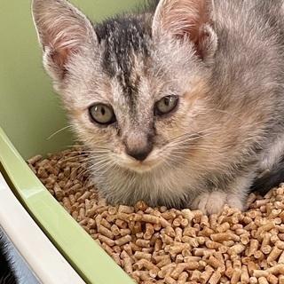 多頭飼育寸前からの保護猫2(1.3.4.5)