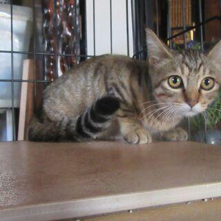 保護猫のイーちゃん 3か月半の女の子です