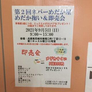 明日、9/5(日)第2回ネバーめだか屋塚口店でメダカ掬い&即売会...