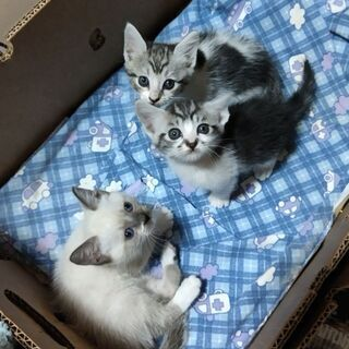 数匹の子猫 里親募集
