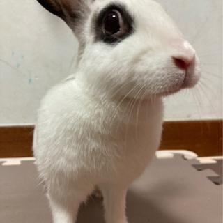 里親募集 ウサギ2匹 メス