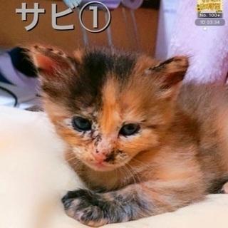 【一時停止】7月15日産まれの子猫です!