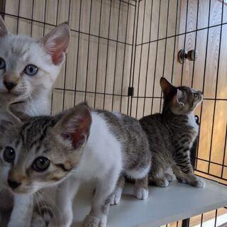 生後4ヶ月の子猫たちの里親を募集しております